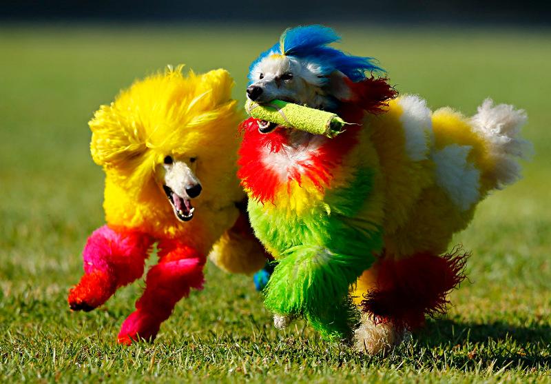 Agosto: será mesmo o mês do cachorro louco?